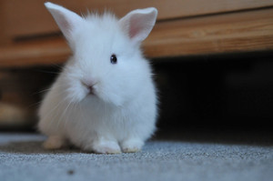 China Modifies Its Position on Animal Testing
